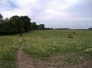 Highlands_im_Juli_2010